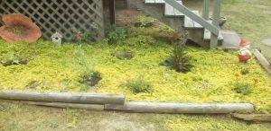 Now with borage, perennial salvia, creeping rosemary, penstemmon and verbena