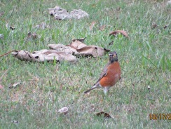 Robin Checking me out