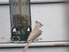 Yes, I am looking at you, little titmouse!